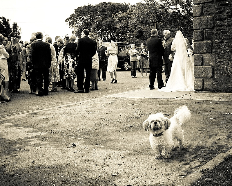 Dog stands outside Church at wedding