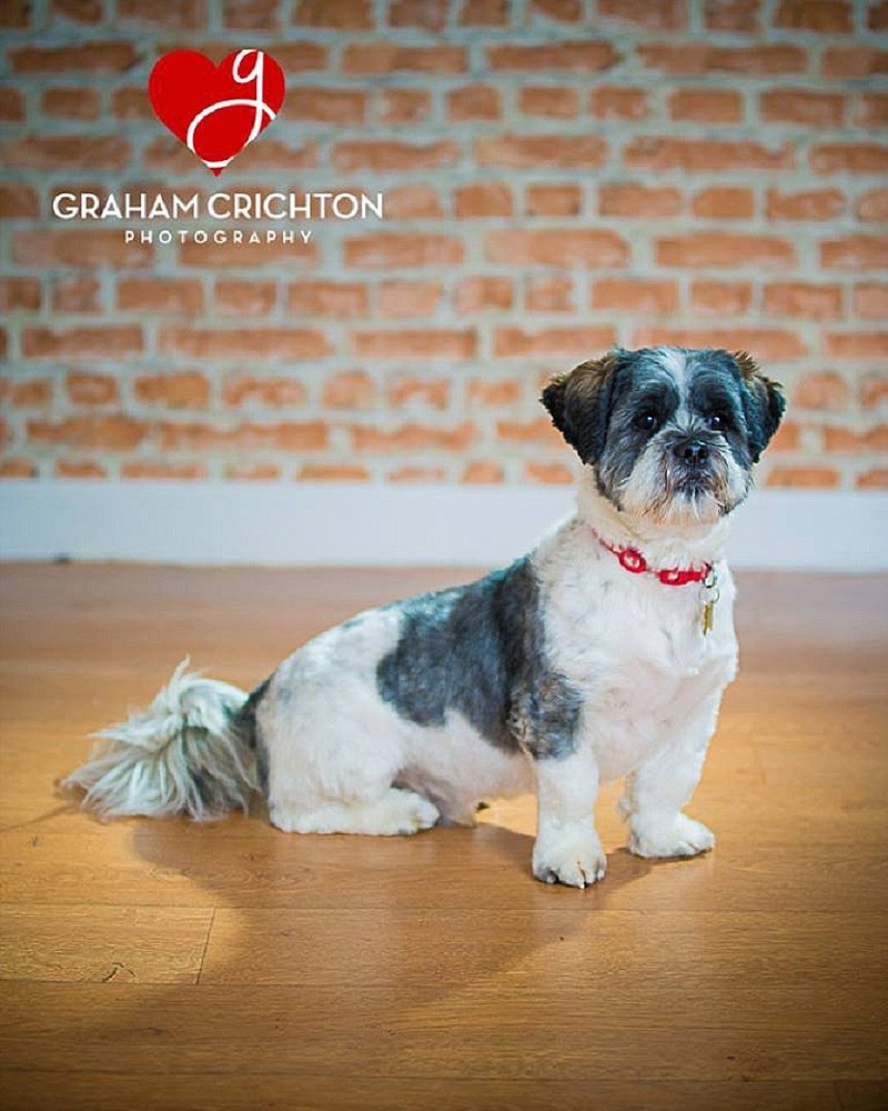 Glyn The Dog Lhasa Apso
