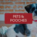 Link to pet and dog photographer Northern Ireland