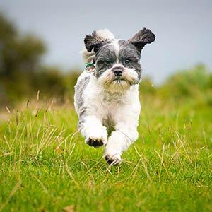 Glyn the Dog