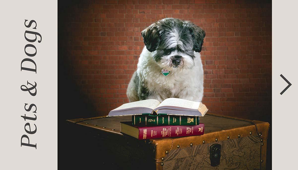 Belfast dog photography