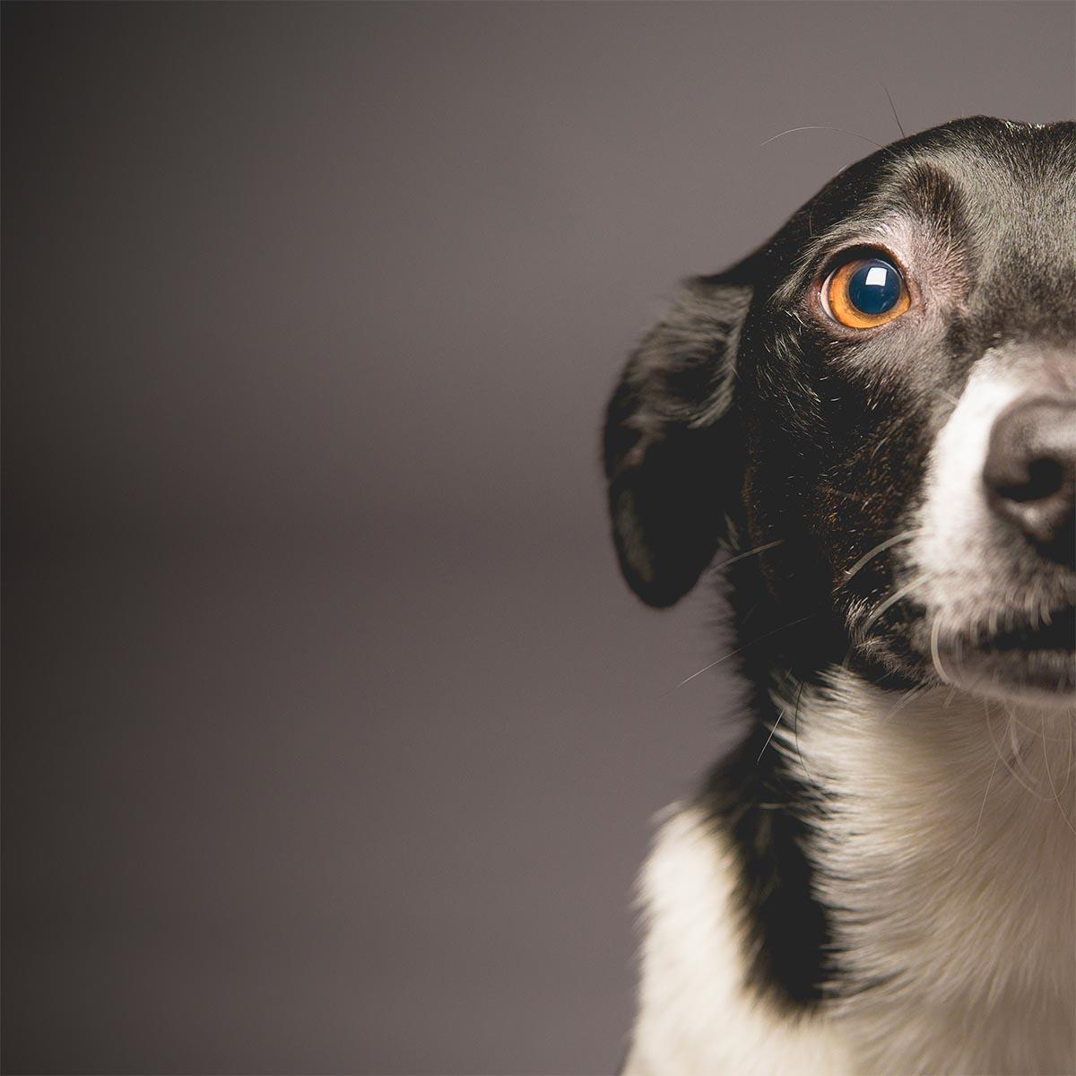 Pet Portrait Promotion