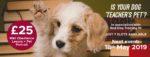 Teacher's Pet: Dog Portrait Shoot + Mini Obedience Lesson
