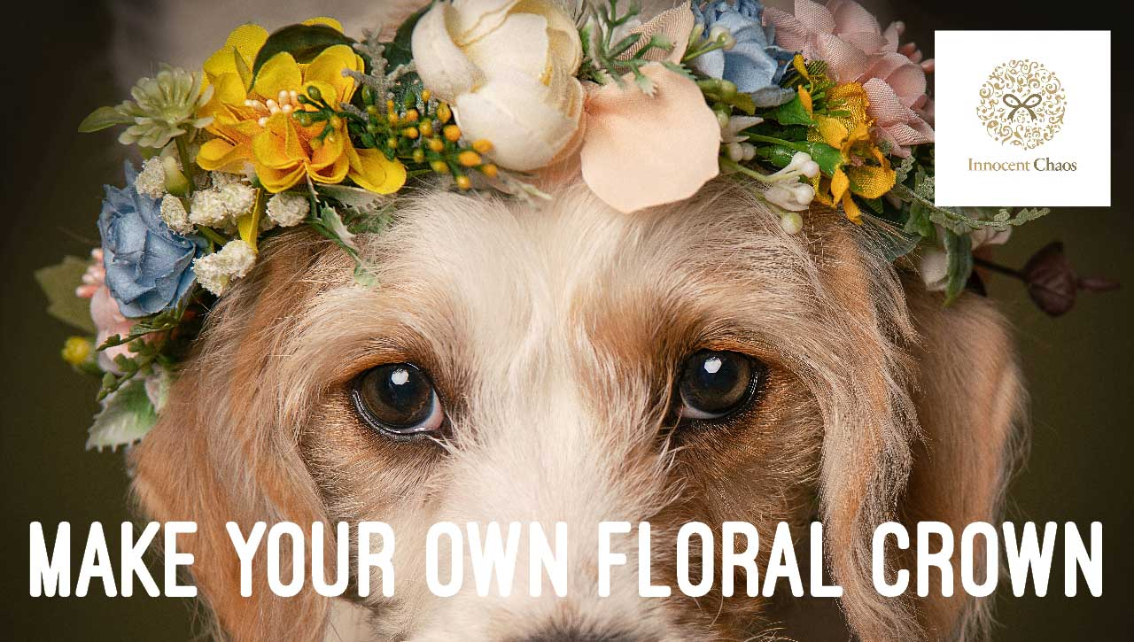 Make Your Own Floral Crown for Your Dog