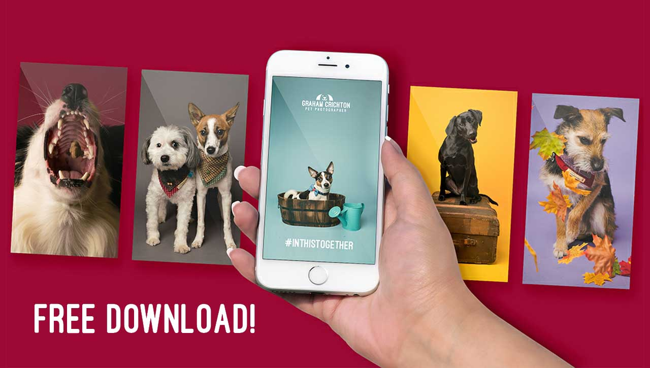 Free Daily Pet Wallpapers for your phone