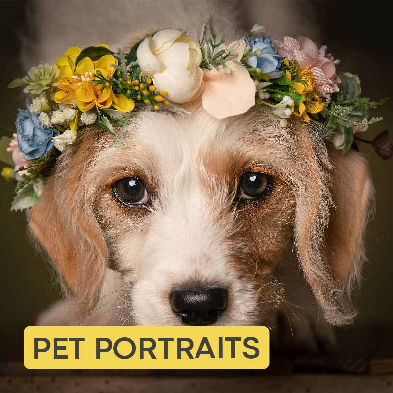 Pet photographer photographing dogs and cats Belfast