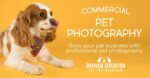 Experienced Commercial Pet Photographer Northern Ireland
