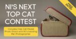 NI's Next Top Cat Photo Contest - Free Entry & Free Photo Shoot