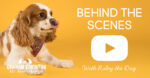 Behind the Scenes at Riley's the Dog's Pet Portrait