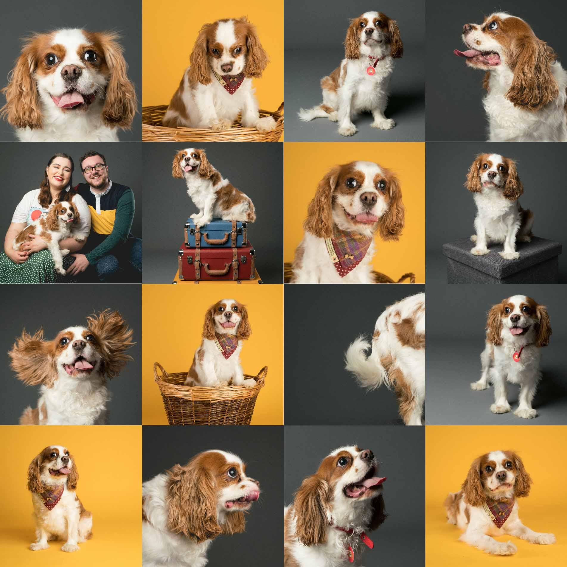 Riley's Humans Favourite Pet Photographs