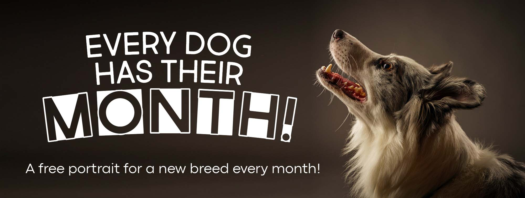 Every Dog Has Their Month