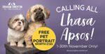 Calling All... Lhasa Apso's - Free Pet Portrait worth £125