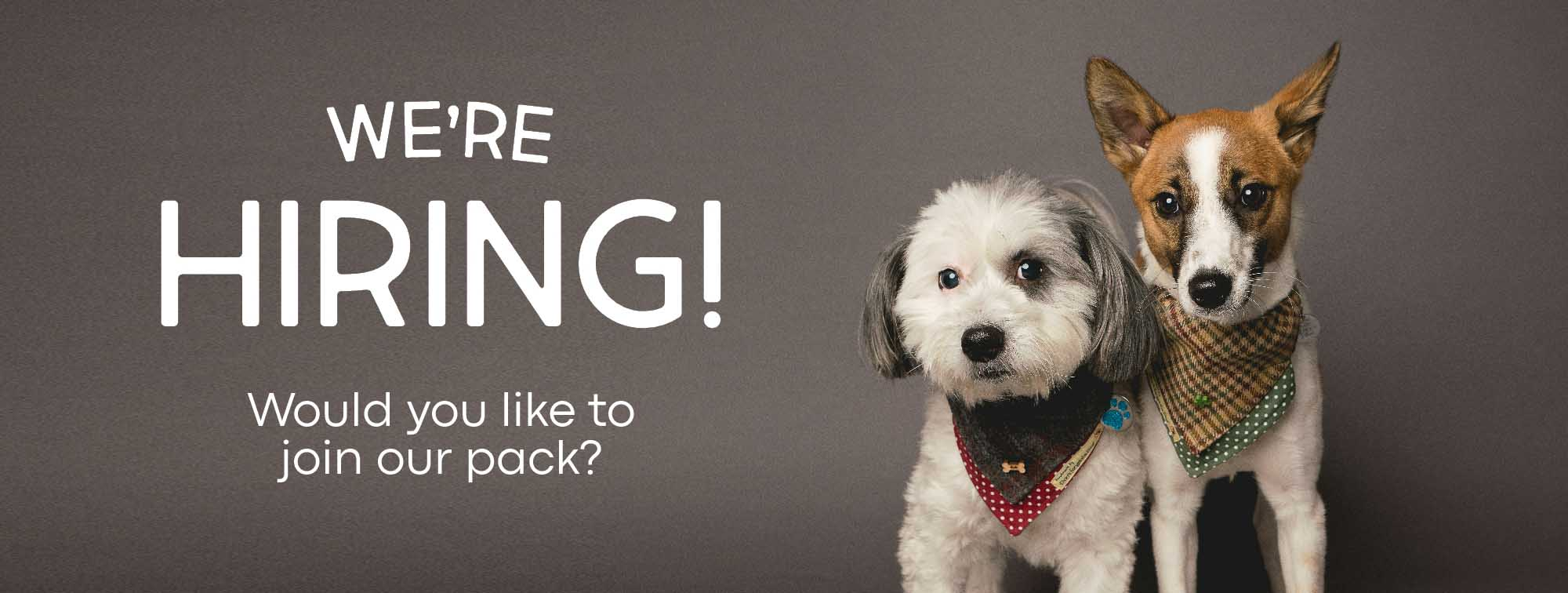We're Hiring - Join Our Pack