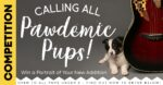 Win a Pawdemic Puppy Portrait worth £150!